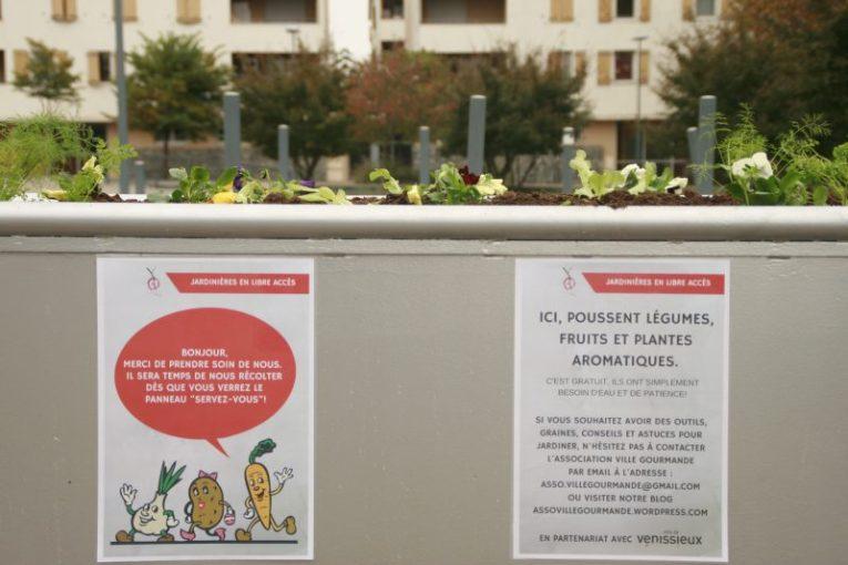 Inauguration des jardinières - Quartier du Cerisier à Vénissieux