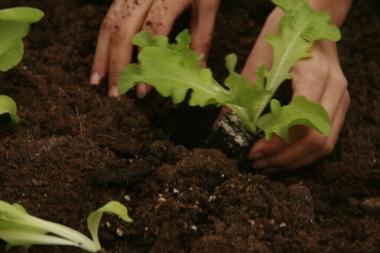 ville-gourmande-association-inauguration-jardiniere-venissieux